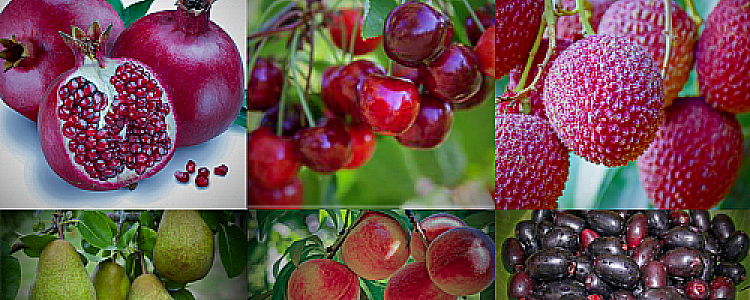 6 Immunity Booster Fruits For This Monsoon Season
